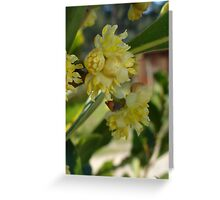 The Glorious Buds of Bay Greeting Card