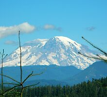Mt. Adams by kchase