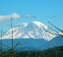 Mt. Adams by kchase