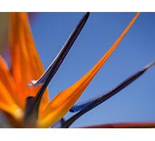 Abstract flight Photographic Print