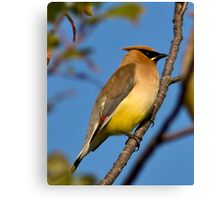 Beauty on a branch Canvas Print