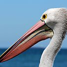 Percy the Pelican by Brent Randall