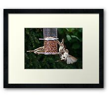 Feeder Fight Framed Print