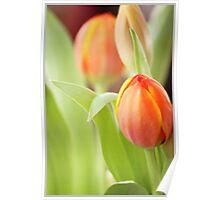Tulip Risen Poster