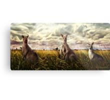 3 kangaroos Metal Print