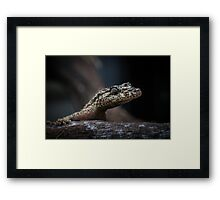 Saltuarius moritzi, the Northern Leaf-Tailed Gecko! Framed Print