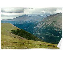 Longs Peak Elk Herd Poster