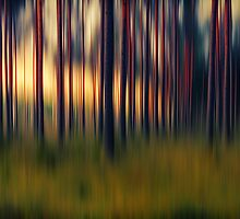 Chorus of trees by pawelmatys