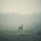 Mamma moose by pawelmatys
