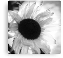 Sunflowers BW Canvas Print