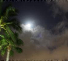 Palms & Moon by lighthousegrphx