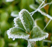 Green but Frozen Sticker