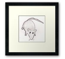 Buffy the Rat. Framed Print