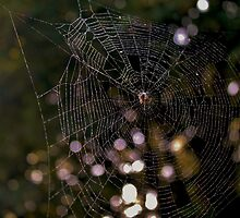A Spider and it's Web by Hannah Taylor