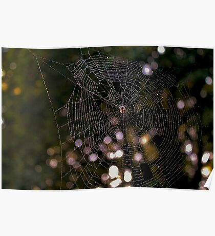 A Spider and it's Web Poster