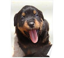Cute Rottweiler Puppy With Tongue Out Poster
