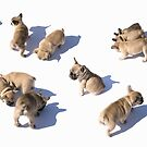 Frenchies on the move by Andrew Bret Wallis