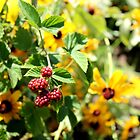 Sunflower Berries by LaurelMuldowney