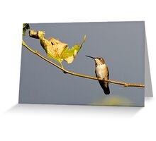 Hangin' Out Greeting Card