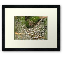 Funnel Wolf Spider & Droplets Framed Print