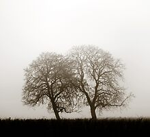 Winter tree silhouette in great fog, natur concept by Alexander Sorokopud
