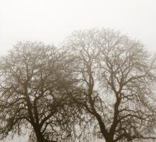 Winter tree silhouette in great fog, natur concept Sticker