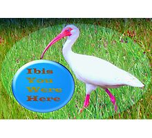 Ibis with a Wish Photographic Print