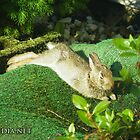 Bunny In Repose by 319media