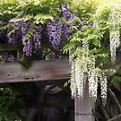 The Wisteria Arbor in the Garden by SummerJade