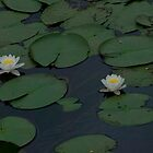 Water Lillies France by Chris Martin