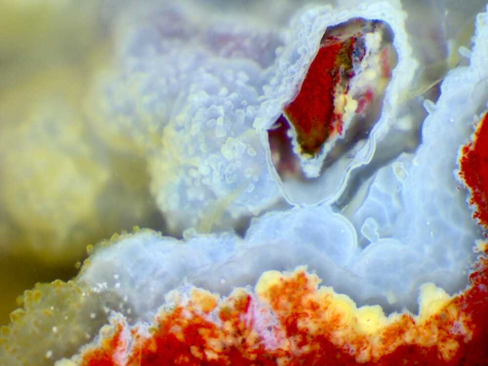 Open Wide (Plume Agate) by Stephanie Bateman-Graham