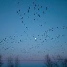 Birds in flight by Chris Martin