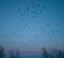 Birds in flight by Chris Martin