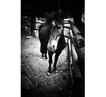Sad Pony Photographic Print