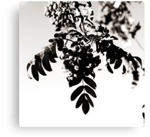 Rowanberries in monochrome Canvas Print