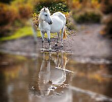 Horse Magic in reflection by Dave  Knowles