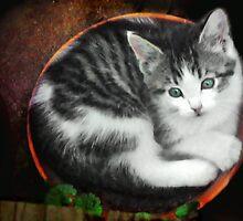 Kitten in a Flower Pot by Nadya Johnson