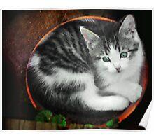 Kitten in a Flower Pot Poster