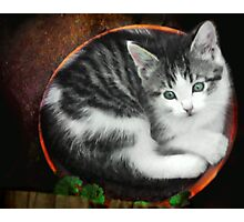 Kitten in a Flower Pot Photographic Print