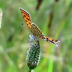 Balance - Small Copper by ienemien