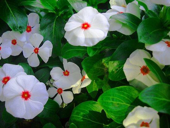 White Flowers by Vitta