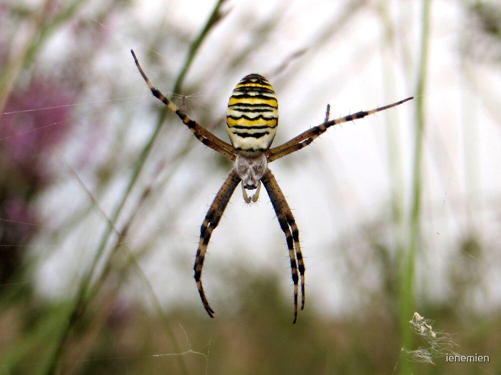 Wasp Spider by ienemien