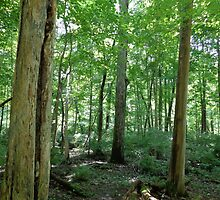 Wooded Canopy At John Bryan State Park by Brian Schell