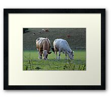 Moo Cows Framed Print