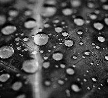 Drops by Jesse J. McClear