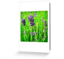 A Little Bit of Lavender in a Sea of Green Greeting Card