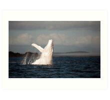 White Whale Wave - Migaloo Art Print