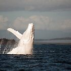 White Whale Wave - Migaloo by Jenny Dean