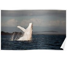 White Whale Wave - Migaloo Poster