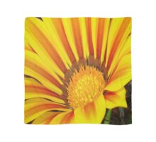 A Yellow and Maroon Striped Gazania Closeup Scarf